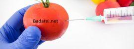 Dajte mi 5 minút a vysvetlím vám, prečo sú geneticky modifikované potraviny nebezpečné