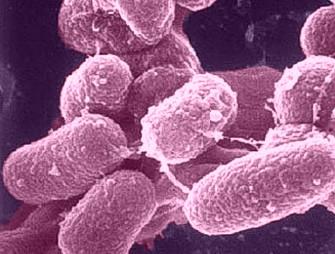 Paratuberkulózna mykobaktéria