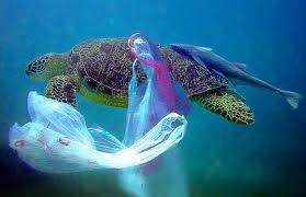 Ako závislosť na plastoch ničí našu planétu
