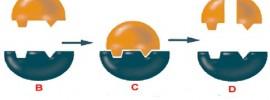 Ako využiť enzýmy na liečbu zápalov, prečistenie krvi a posilnenie imunity