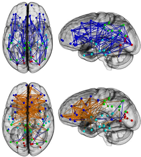 mozgove prepojenia