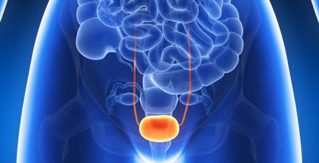 infekcie močových ciest a močového mechúra