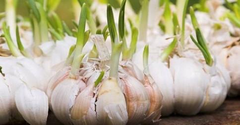 nakliceny cesnak