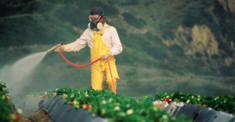 pesticídy v ovocí a zelenine