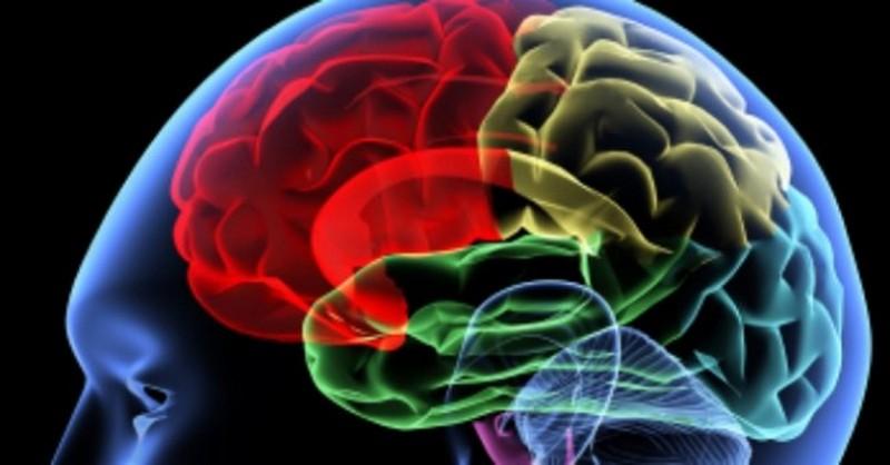 detský mozog