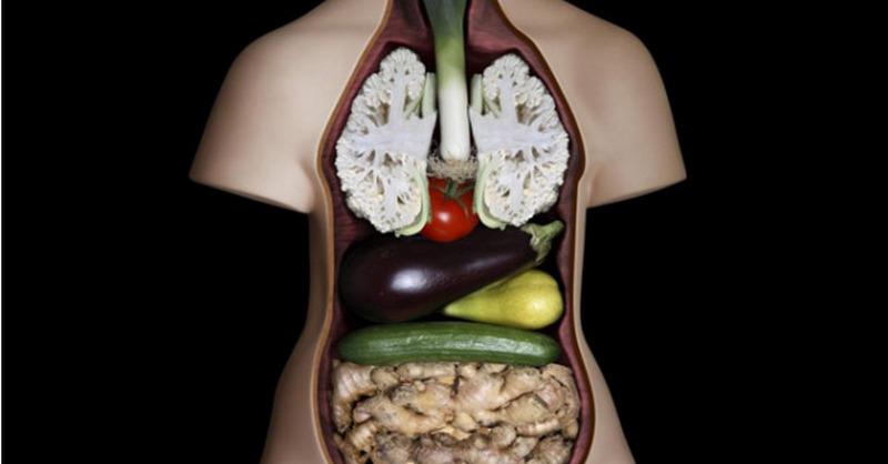 podobnost-organy-potraviny