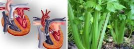 15 vážne dobrých dôvodov, prečo jesť zeler každý deň