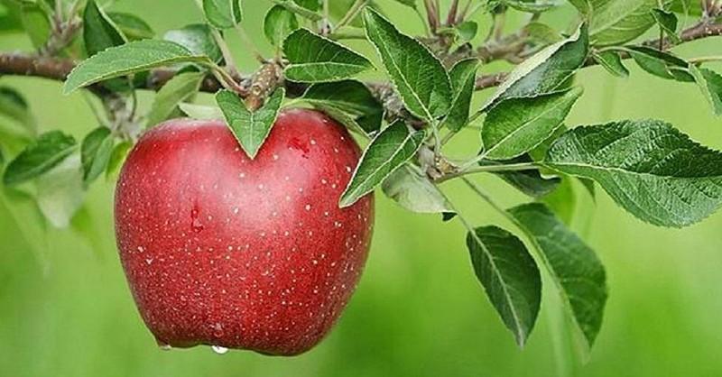 Tak toto nikto nečakal: Prečo je obyčajné jablko jedno z najlepších ovocí na rakovinu