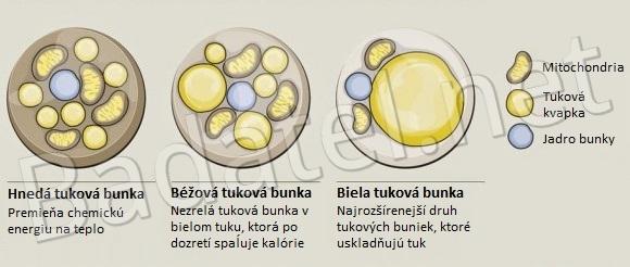 ako-schudnut-1