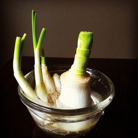 domaca-zelenina-10