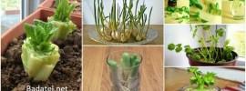 10 druhov zeleniny, ktoré kúpite raz a znovu dopestujete navždy