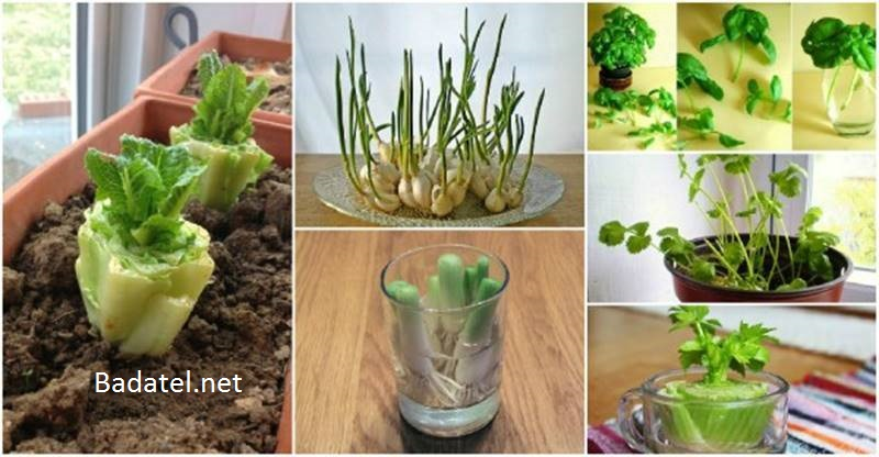 domaca-zelenina