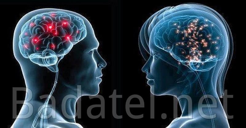 mozog a správanie