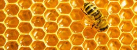 4 veci, ktoré by ste mali vedieť o propolise