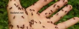 Ako sa ľahko zbaviť mravcov: Nasprejujte po vašom dome túto zmes