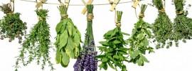 Na vyliečenie takmer každej choroby vám bude stačiť týchto 9 byliniek