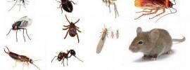 7 spôsobov ako bez chemikálií zbaviť váš domov hmyzu a iných škodcov