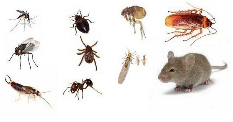 veci-proti-hmyzu