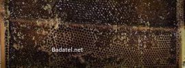 Bol objavený záhadný med, čo ničí všetky možné baktérie