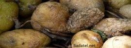 Celá rodina skonala po fatálnej chybe so zemiakmi. A to sa ich ani len nedotkli!