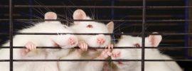 WikiLeaks emaily uvádzajú, že toto obľúbené umelé sladidlo vytvára diery v mozgoch myší
