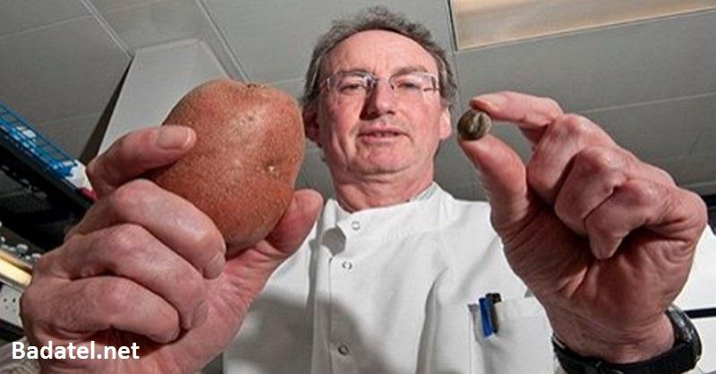 O tomto musíte vedieť: Úrady práve schválili zemiaky, čo potláčajú ľudské gény
