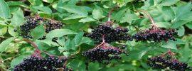 Boj o život: Táto rastlina ma zachránila pred rakovinou