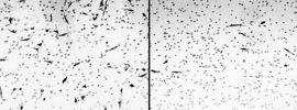 Sledujte ako konope ničí rakovinové bunky pod mikroskopom