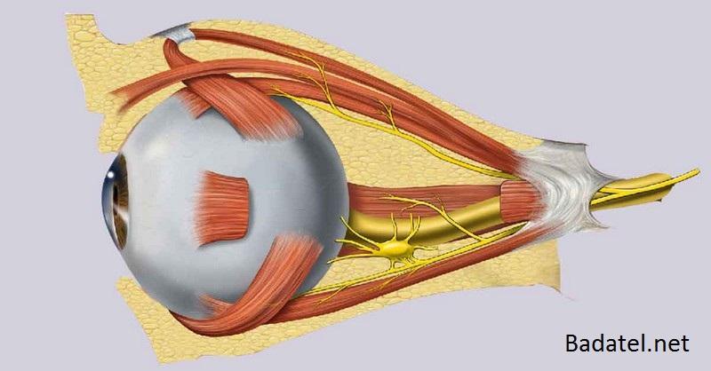 Prírodná liečba šedého zákalu, suchých očí a zápalov spojiviek