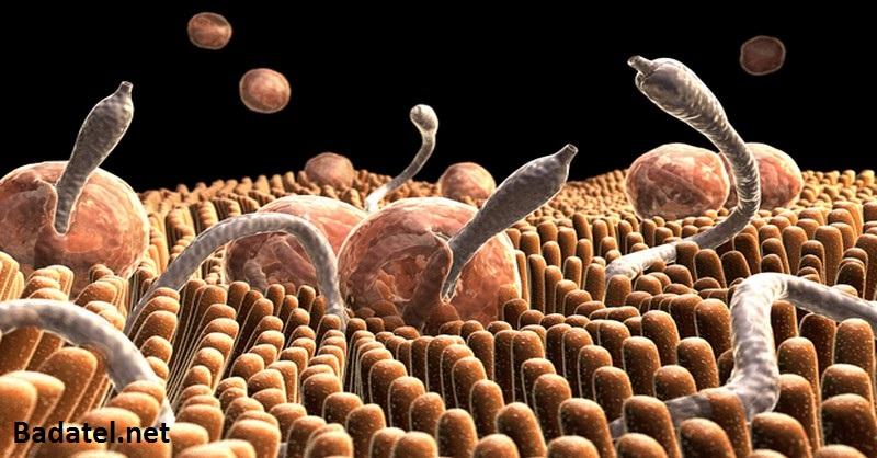 Zbavte sa črevných parazitov pomocou týchto ingrediencií