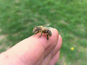 Dve dôležité veci, ktoré nás učia včely