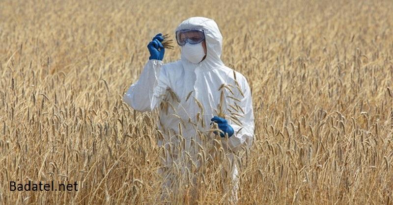 7 spôsobov, ako geneticky modifikované plodiny ničia planétu a ľudstvo