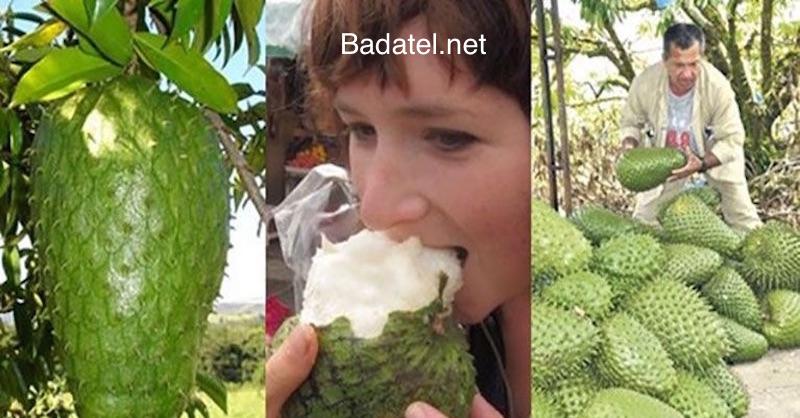 Graviola: Utajované ovocie na rakovinu, o ktorom by mal každý vedieť