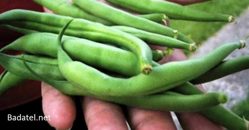 Aké množstvo plodín by sme si museli dopestovať, aby sme z nich vyžili jeden rok?