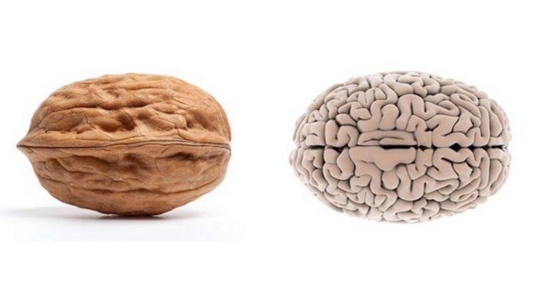 3 potraviny, čo vyzerajú ako orgán, ktorý liečia
