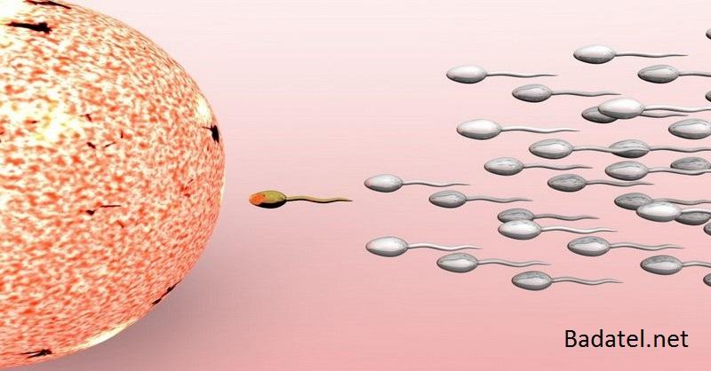 Pohlavný styk nie je potrebný – podľa ohromujúceho nového výskumu bunky organizmu prenášajú genetické informácie priamo do spermií