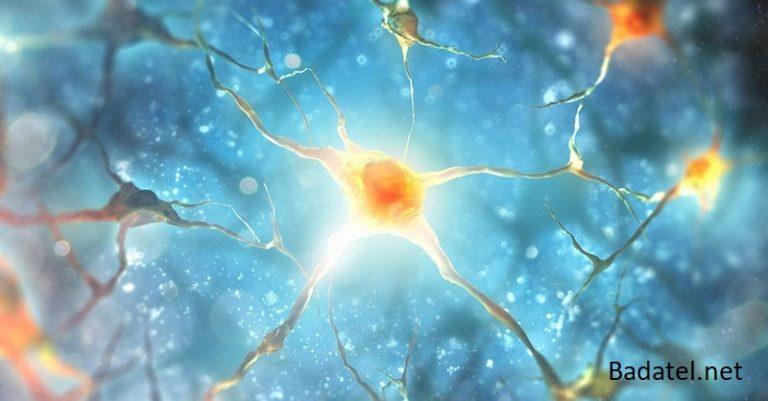 6 tkanív ľudského tela, ktoré sa dokážu regenerovať prostredníctvom výživy