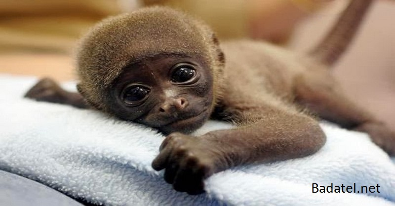 U mláďat opíc sa po vakcínach, ktoré podávajú aj deťom, objavili symptómy autizmu