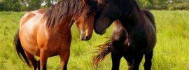 Liečivá sila srdca: stretnutie s liečivými koňmi