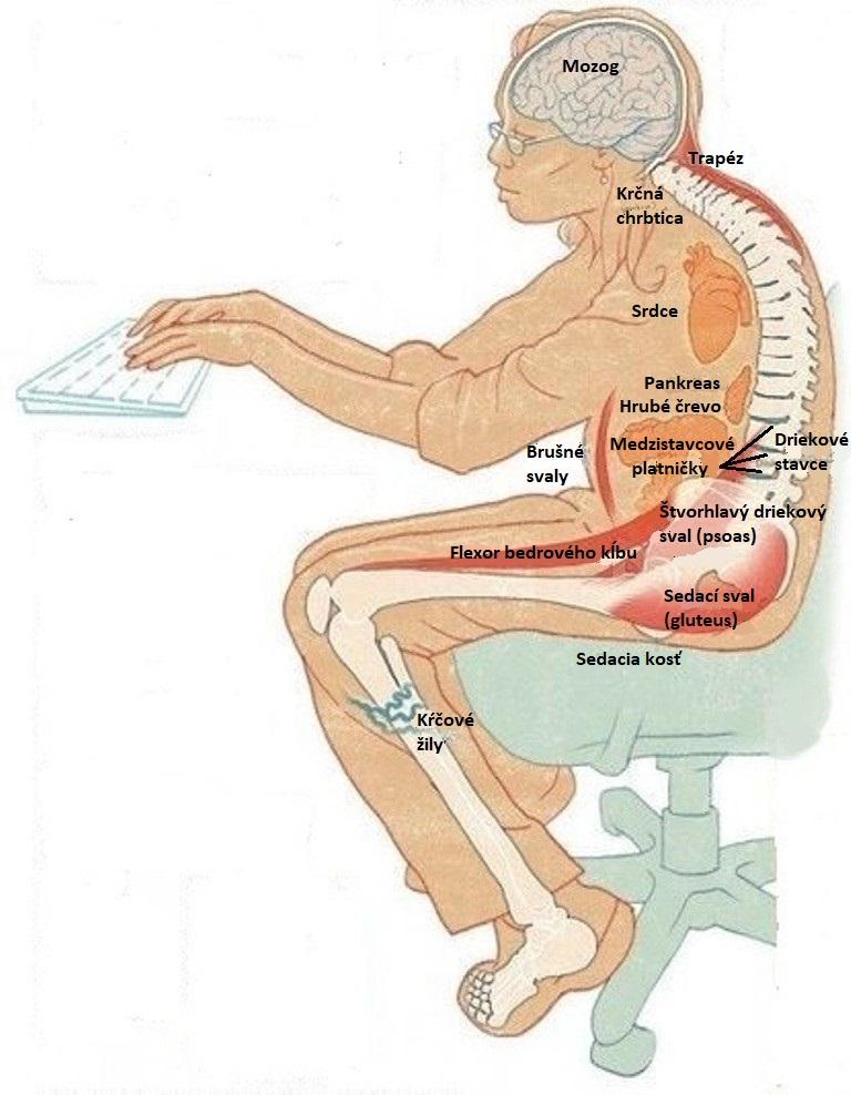 Skupina vedcov vysvetľuje, aké následky môže mať pre naše telo dlhodobé sedenie