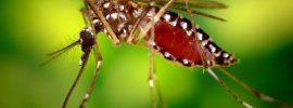 Prečo sú niektorí ľudia magnetom pre komáre,prírodná ochrana, prvá pomoc po uštipnutí