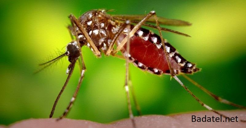 Dôvody, prečo sú niektorí ľudia magnetom pre komáre a ako sa môžete brániť