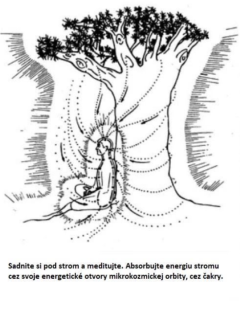 Čchi energia stromov vám môže pomôcť vyliečiť sa. Presný návod ako postupovať.