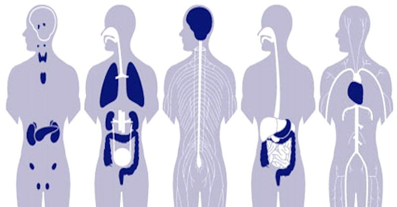 Najlepšie tipy na detoxikáciu tela od toxínov, ťažkých kovov a parazitov