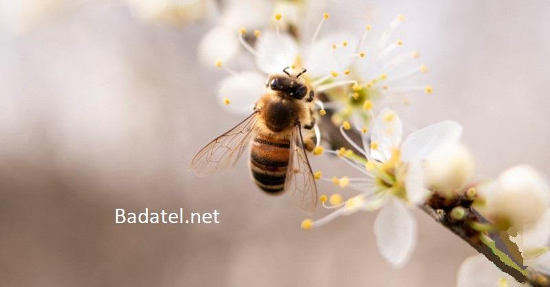 8 praktických vecí, ktoré môžete robiť, aby ste pomohli zachrániť včely