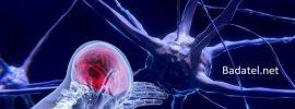 """Ohromujúci objav neurovedcov o """"bezdrôtovej"""" komunikácii mozgu"""