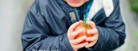 Štúdia zisťuje, že už týždenná konzumácia organickej stravy znižuje hladinu toxínov