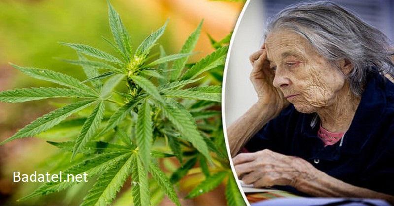 Neľudská prohibícia: Ako zakázané THC ničí bielkoviny spôsobujúce Alzheimerovú chorobu