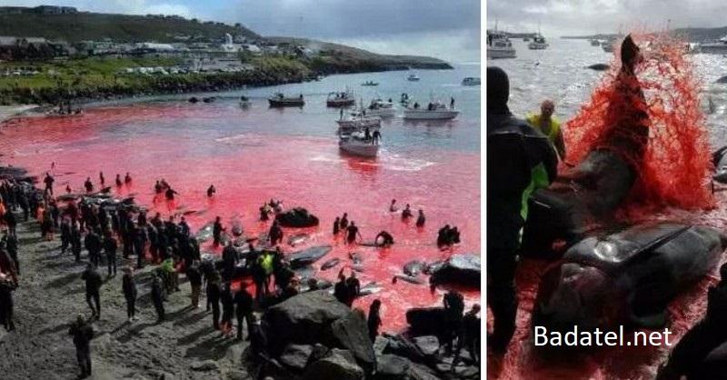 Po zmasakrovaní 150 veľrýb a delfínov sa more farbí krvou dočervena
