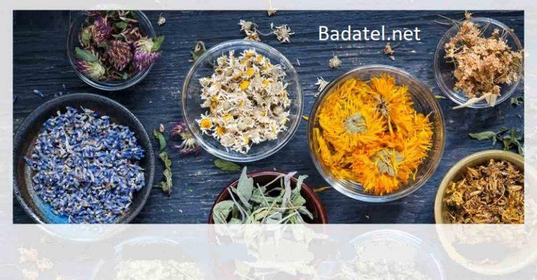 Ako používať 10 najlepších liečivých rastlín a bylín